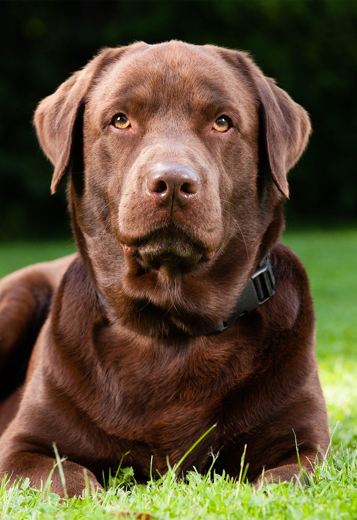 Staph Infection In Dogs - Everything You Need To Know