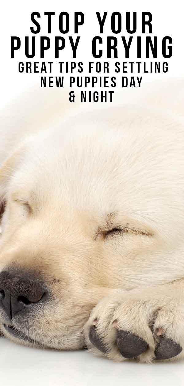 Puppy Crying At Night >> Puppy Crying Tips For Settling New Puppies At Night Or In A Crate