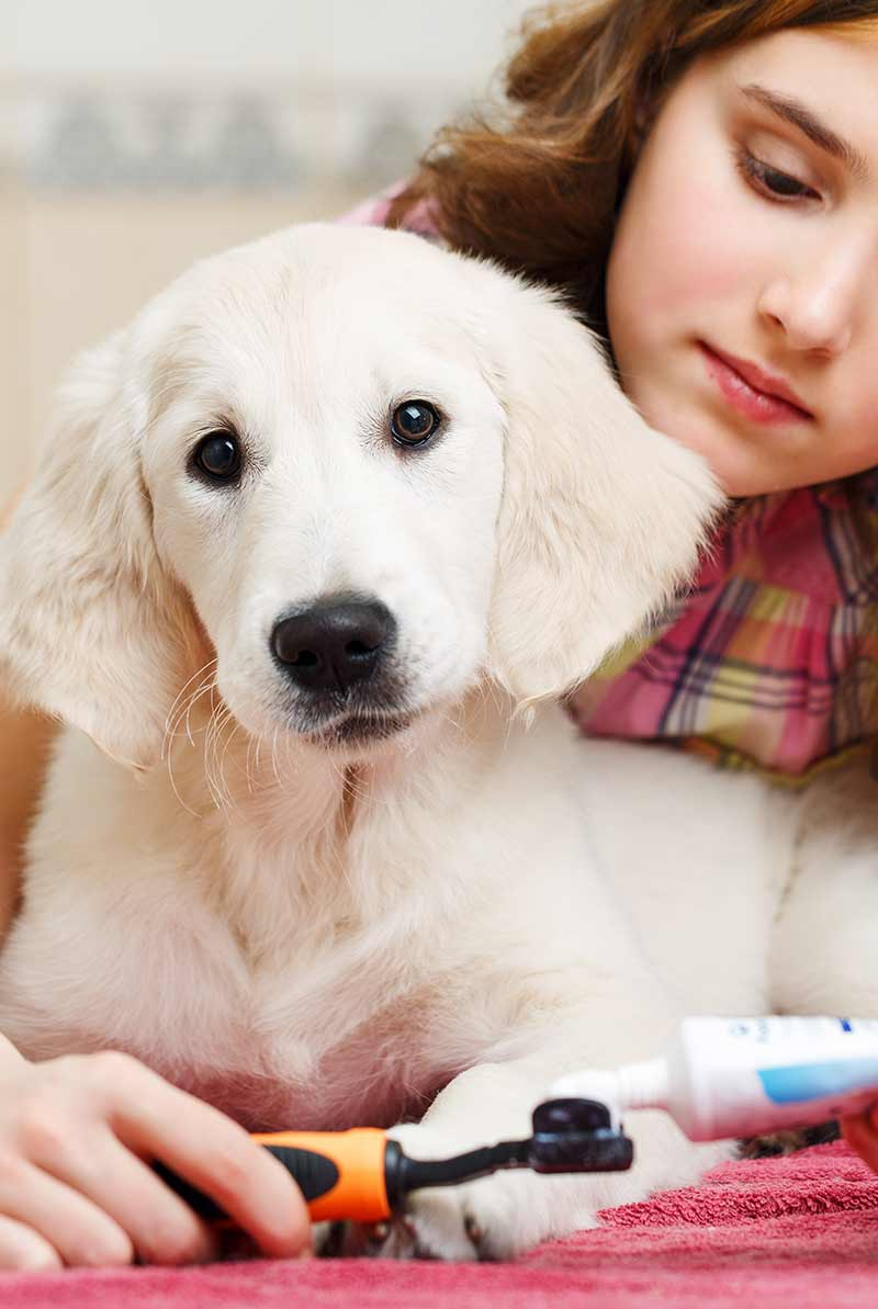 how to brush dogs teeth - the easy way