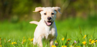 Is colloidal silver for dogs safe?
