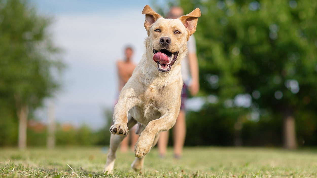 Cool Dog Breeds And Mighty Mixes - The Top Dogs In Town