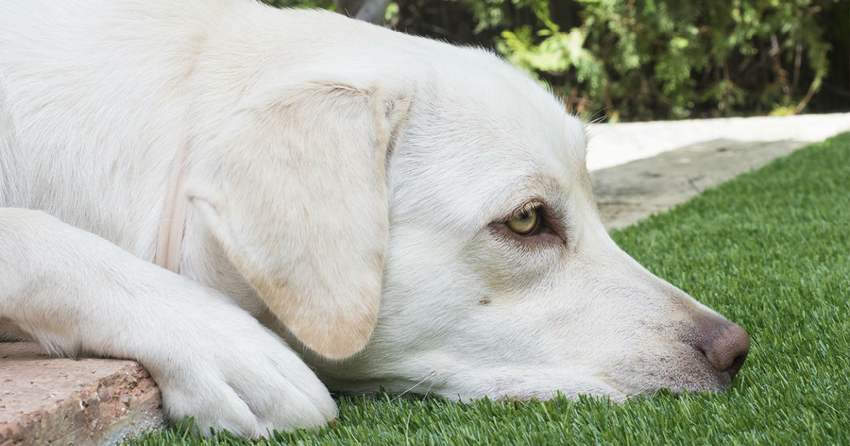 Constipated Dog Home Remedy Nice Houzz