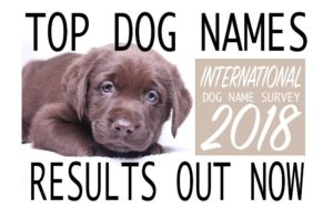 Female Dog Names – 600 Top Names For Girl Dogs
