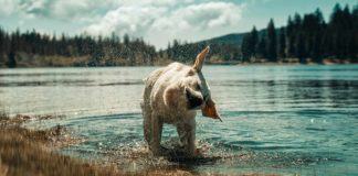 why do dogs shake their bodies