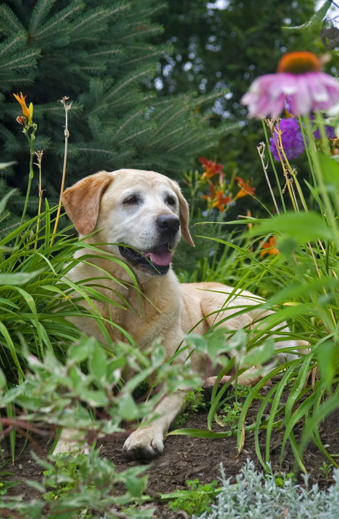 What is Enalapril for dogs?
