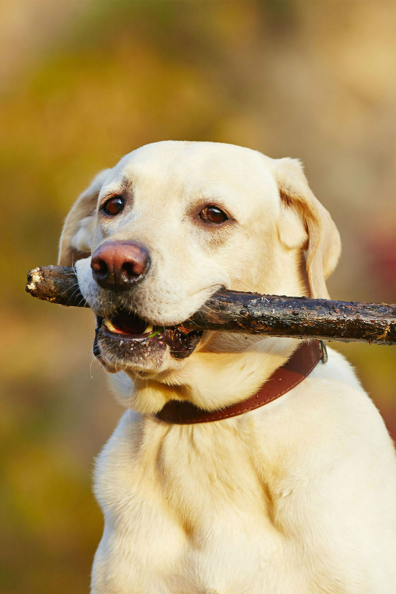famotidine for dogs