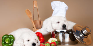Homemade dog food recipes can be healthy for your pup.