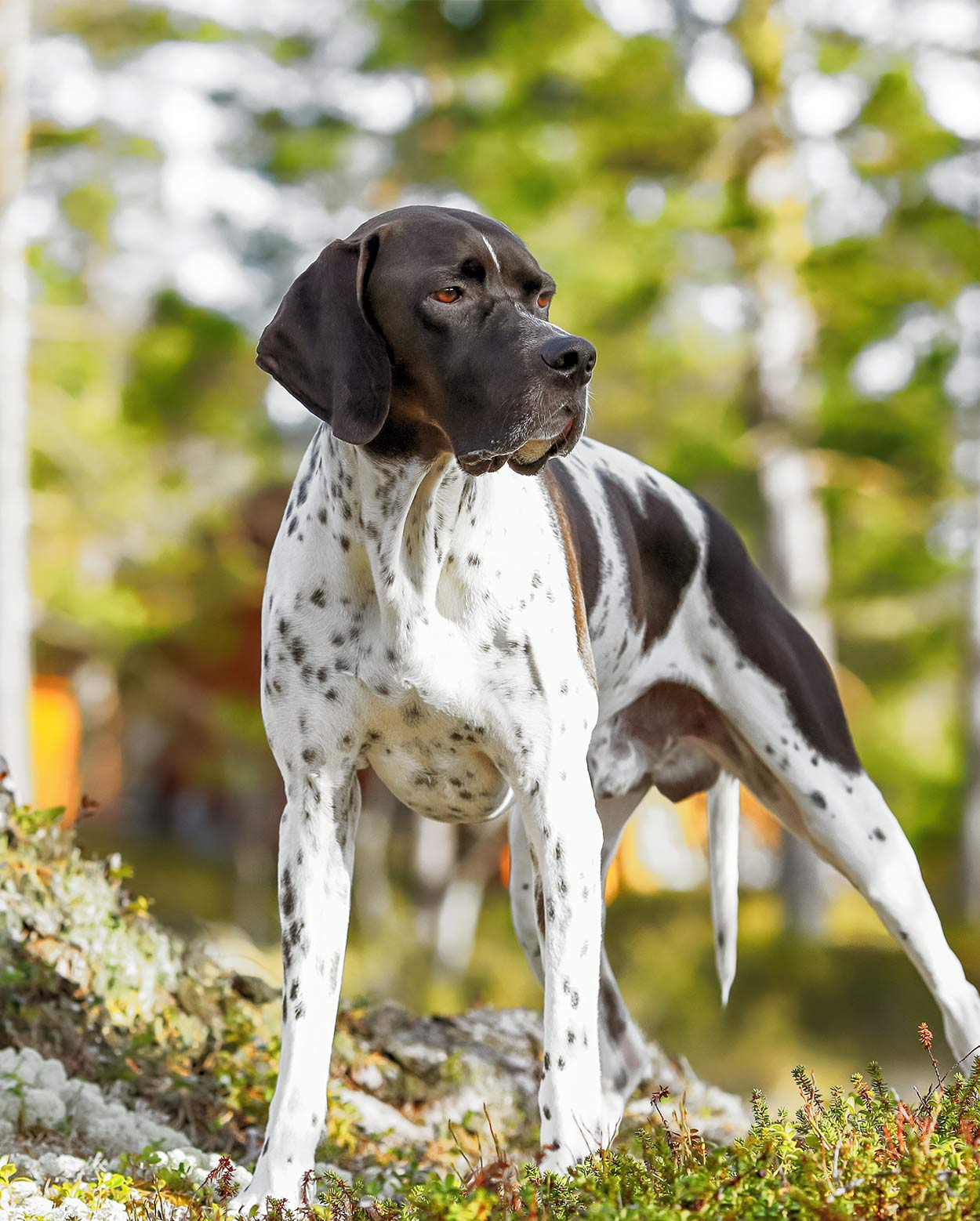 Hunting Dog Breeds - The Best Dogs For Sporting Owners