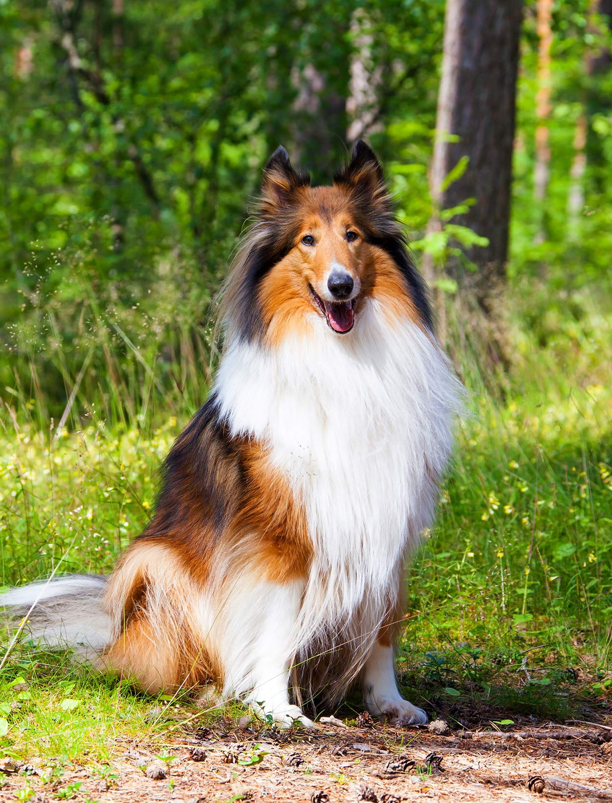 Best Big Dogs >> Best Large Dog Breeds Which Are The Top Family Pets