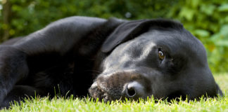Can dogs get staph infection?