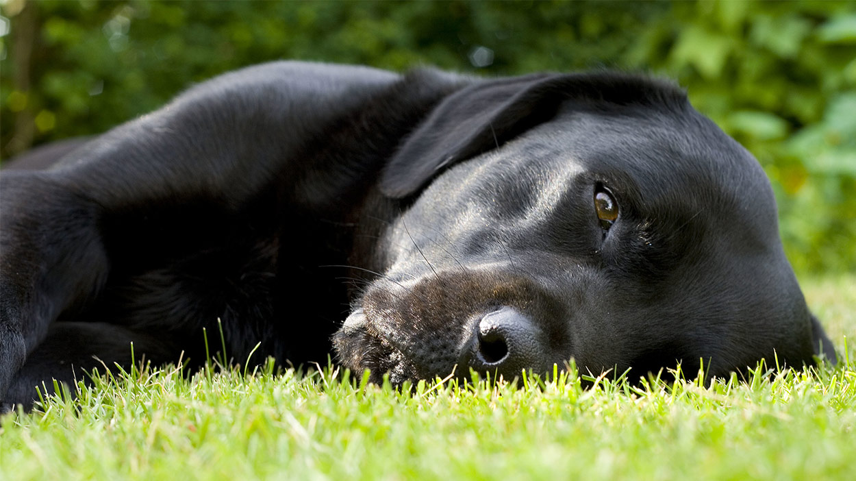 Staph Infection In Dogs Everything You Need To Know