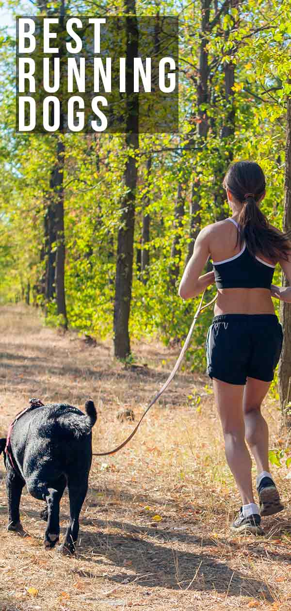 Best Running Dogs- Ideal Companions for Staying Fit with You
