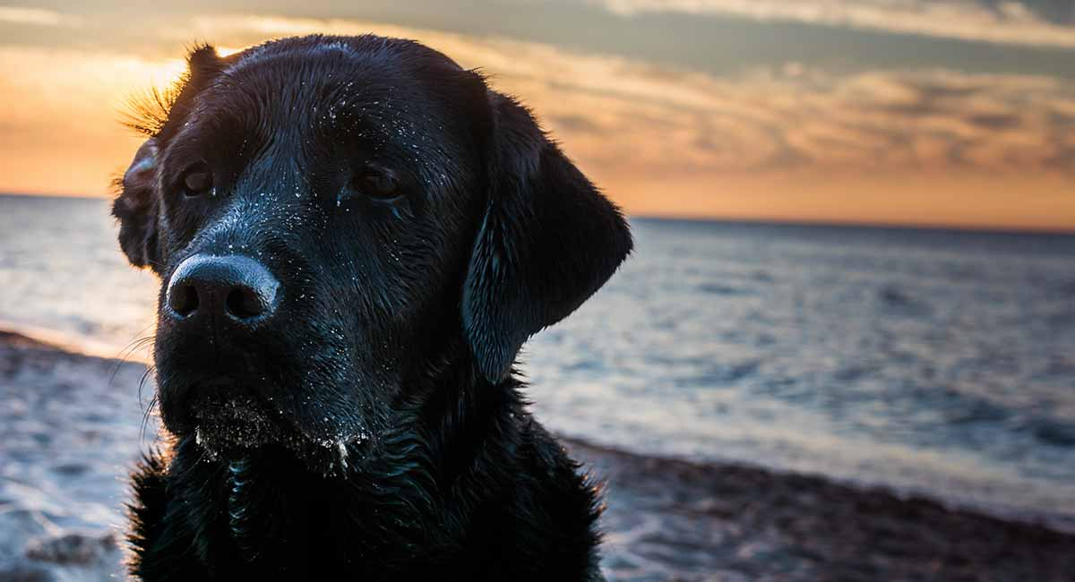 Pet Loss Quotes to Help You Cope When Times Are Tough