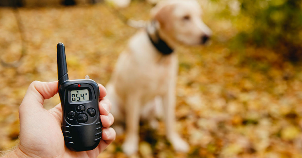 Dog Shock Collar Training: Is It Worth It? - The Labrador Site