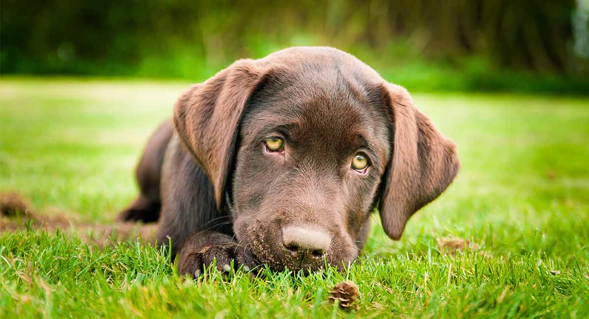 Essential Oils For Dogs What Can They Really Do To Help Our Pet