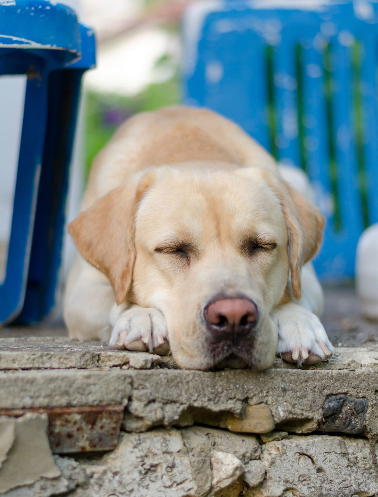 Do you see signs of heartworm in dogs in your own pet?