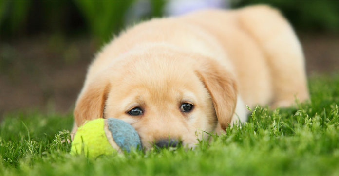 what are signs of heartworm in dogs?