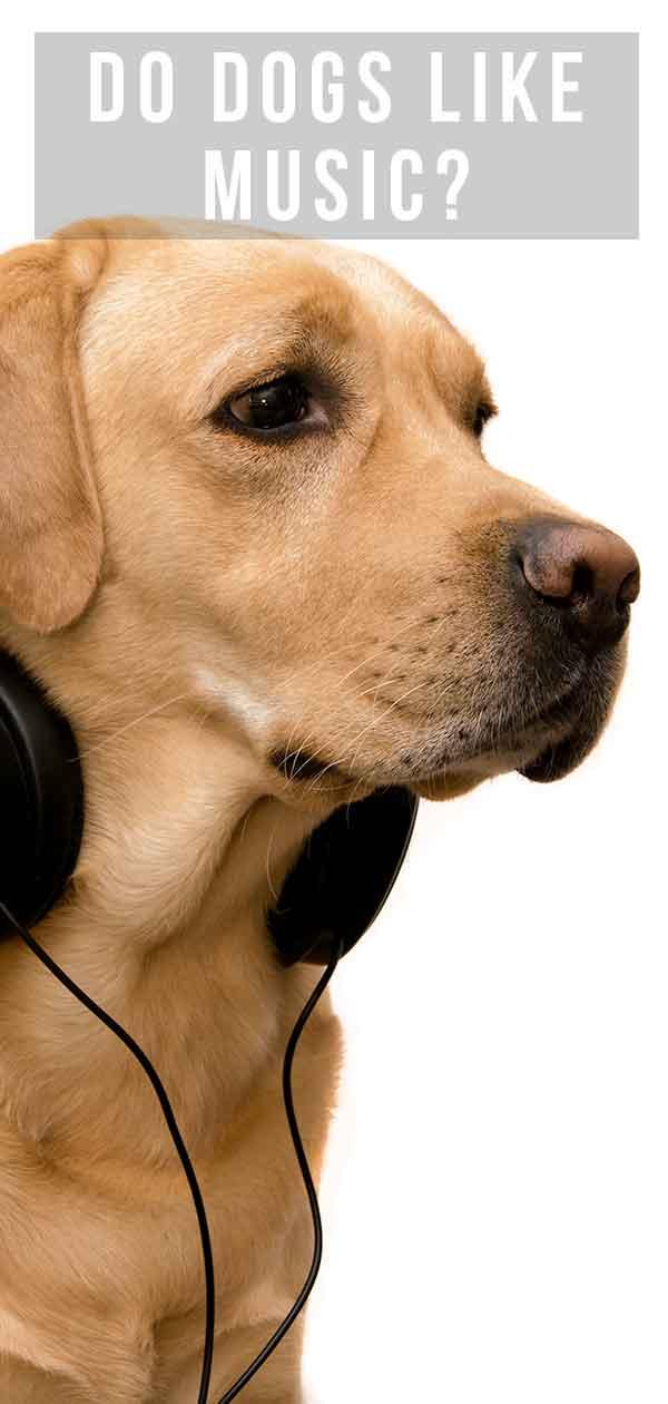 Do Dogs Like Music?