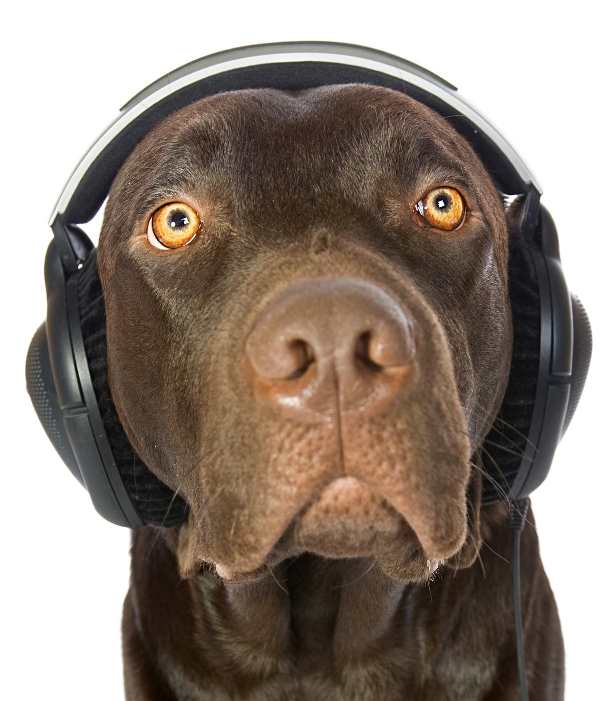 do dogs like music