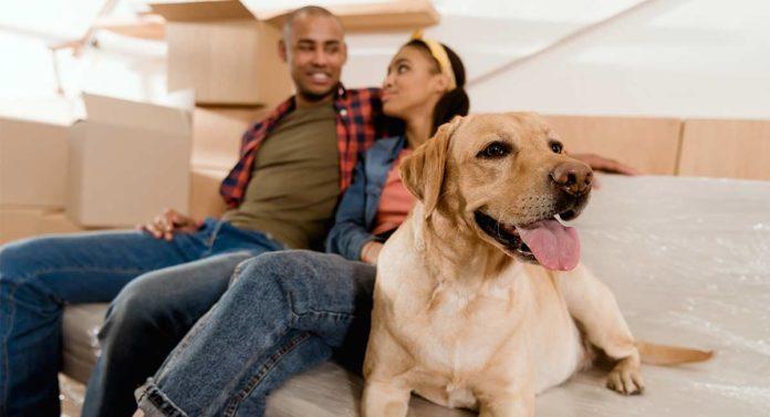 dog sharing