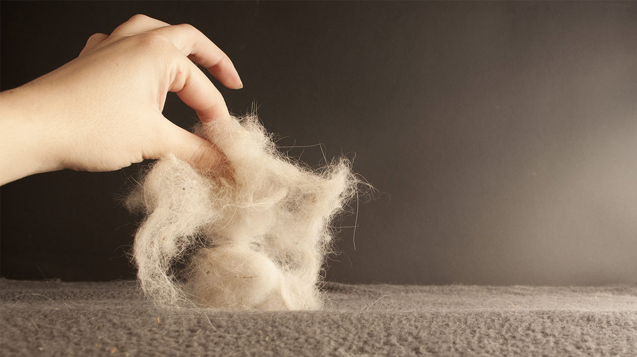 Does Carpet Cleaning Remove Pet Hair