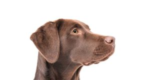 deaf dog training