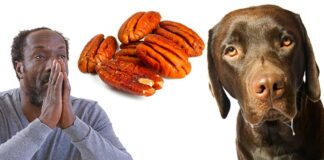can dogs eat pecans?