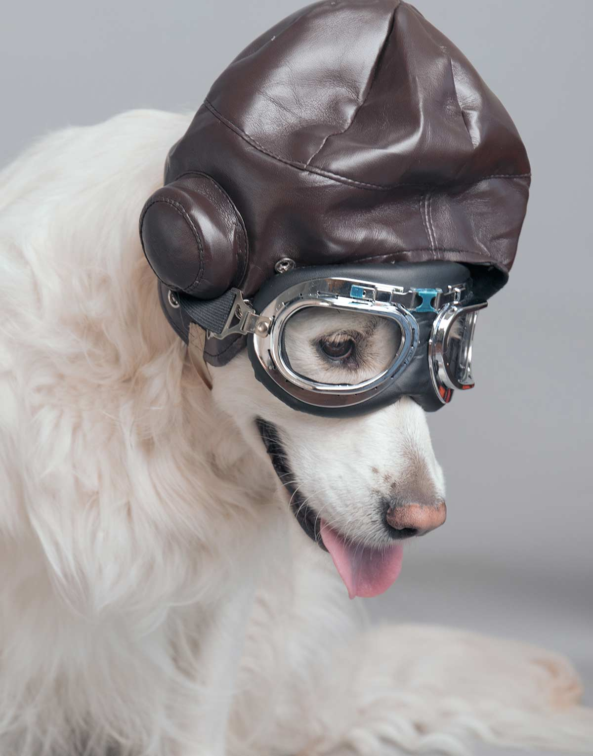 best dog goggles