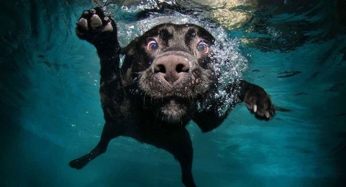 dogs with webbed feet