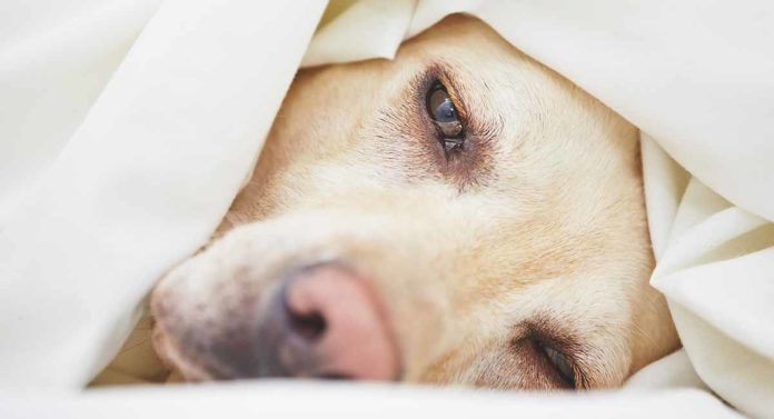 signs of cancer in dogs