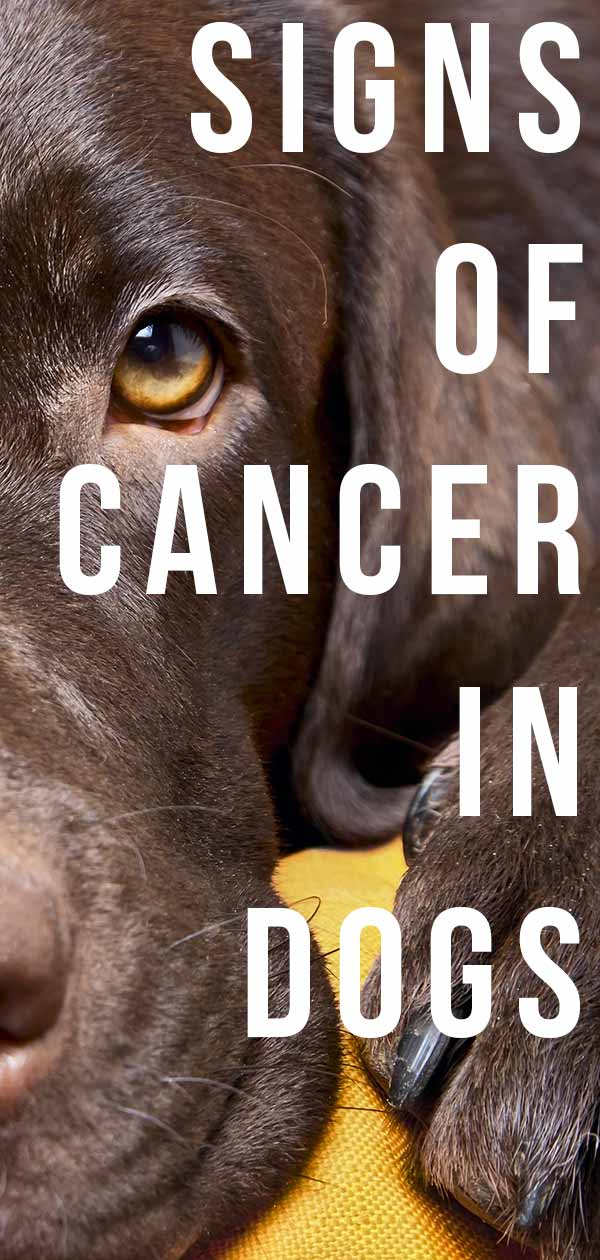 signs of cancer in dog