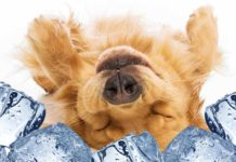 The best cooling pads for dogs!