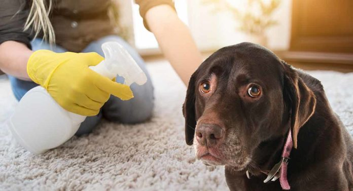 best dog tear stain remover