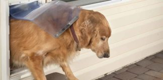 Looking for the best electronic dog door?