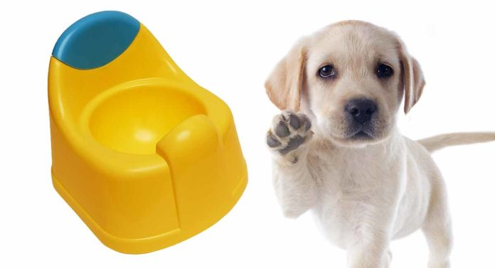 best indoor dog potty