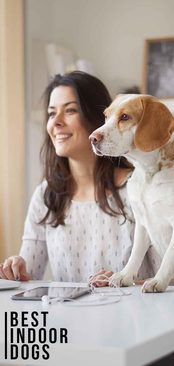 best indoor dogs