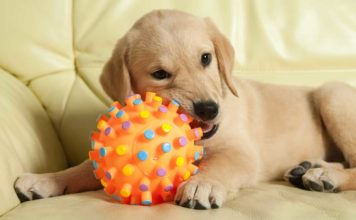 best moving dog toys