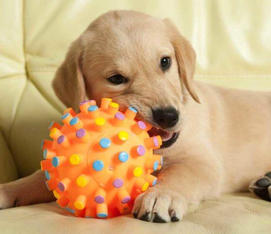 best moving dog toys