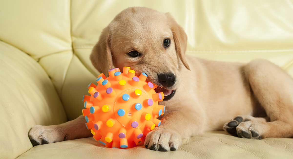 Best Moving Dog Toys for Pups Who Love To Play and Fetch