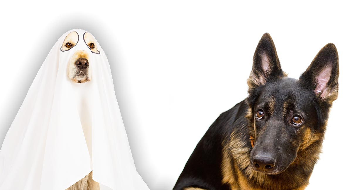 Can Dogs See Ghosts Pets And The Paranormal