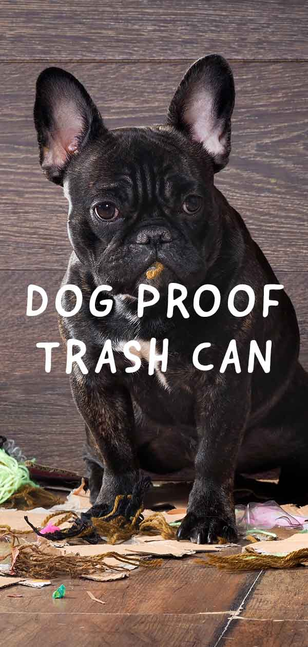 dog proof trash can