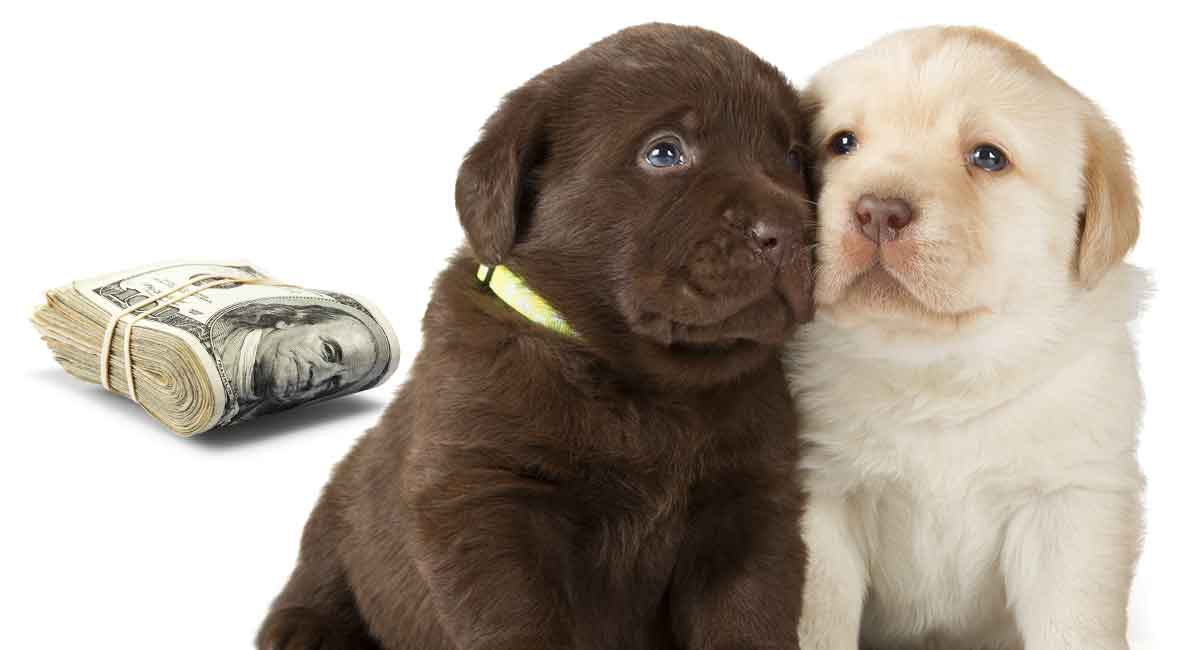 How Much Does A Puppy Cost To Buy And To Keep