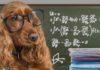 smartest dogs