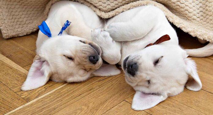 Dog Sleeping Positions