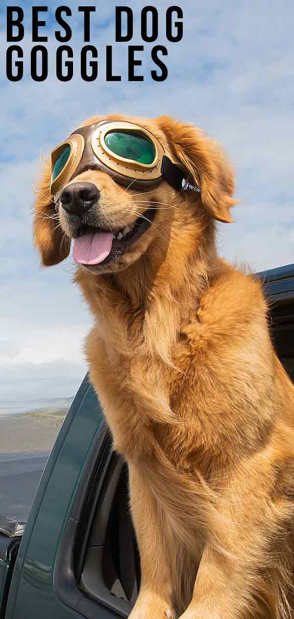 Best Dog Goggles For Keeping Their Eyes Safe Or Just