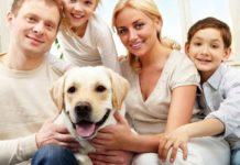 are labrador retrievers good family pets