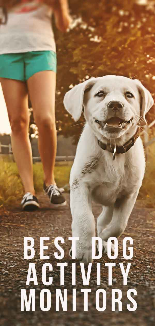 best dog activity monitors