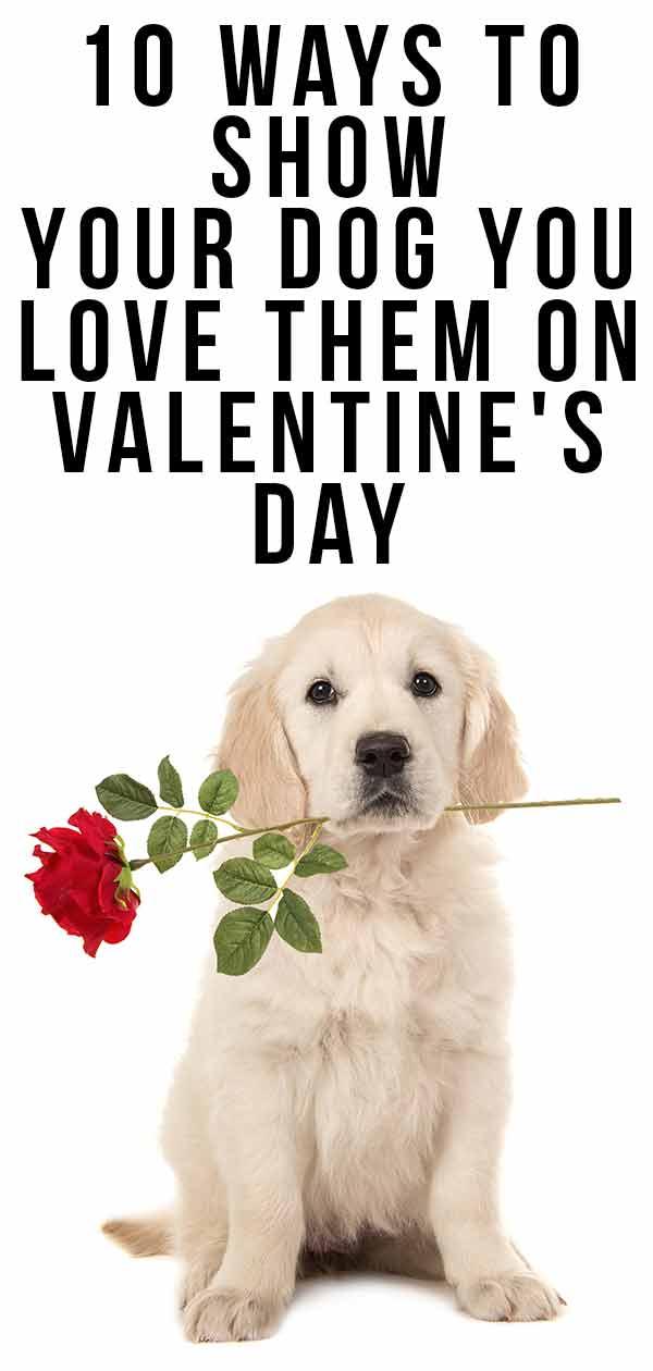 Valentine's Day dog gifts
