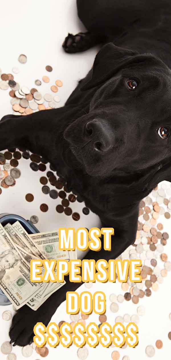 most expensive dog