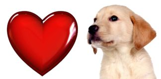 great valentine gifts for dogs